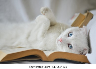 white cat with blue eyes lays over the book