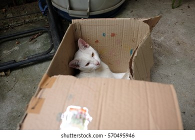 White cat in the box