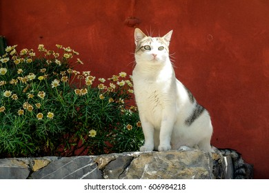 White Cat in Cinque Terre National Park, Italy
