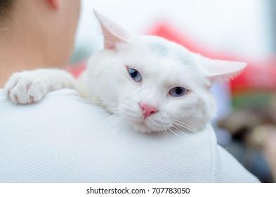 a white cat climb on a man's shoulder