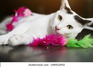 White cat enjoy and relax on wooden floor