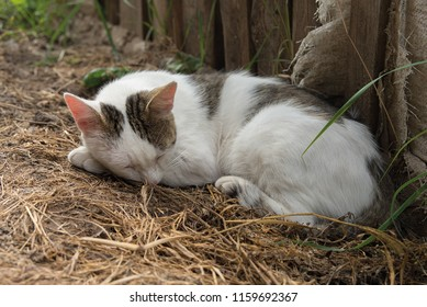 white cat half-dream is sleeping on the ground.