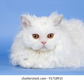 White cat head on blue background