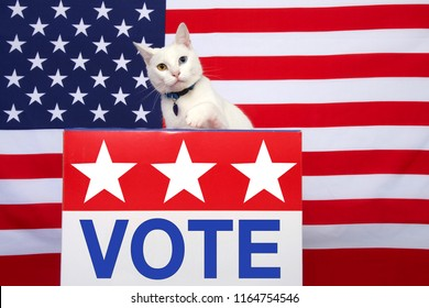 White cat with heterochromia, odd-eyes, one blue one yellow looking towards viewer with paw reaching towards VOTE sign on front of podium box. American flag in background.