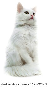 White cat isolated on white background