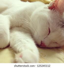 White cat kitten is sleeping