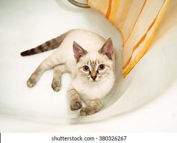The white cat lies in a bathtub