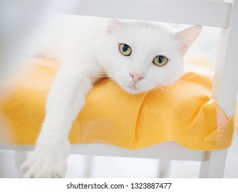 white cat lies orange pillow / cushion on a chair