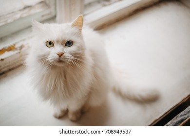 white cat lies / sitting on a windowsill