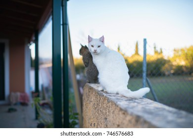 White cat looking towards camera on stone fence.