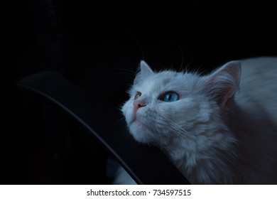 White cat looking up in the window