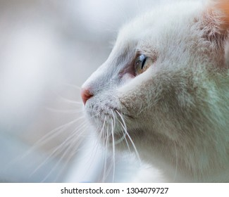 white cat looks in an animal shelter