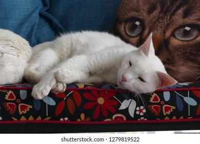 White cat lying on cushion