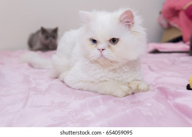 White cat lying on pink bed looking left side