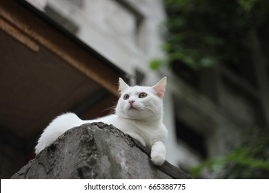 White cat lying on the roof of the house, behind cat brick multistory house