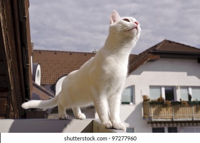 White cat on the fence near the roof