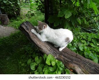 White cat on a log