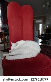 White cat on red chair
