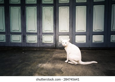 White cat on walking path street. Retro filter.