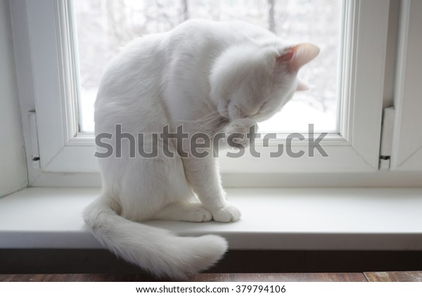 White cat on a white window washes.