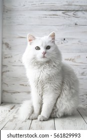 white cat on a white wooden background