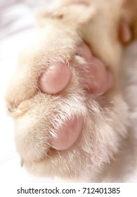 A white cat paw