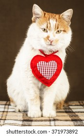 White cat with red spots and mysterious look with decoration in the form of heart on the neck