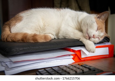 White cat resting on documents.