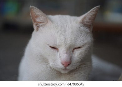 White cat si cute