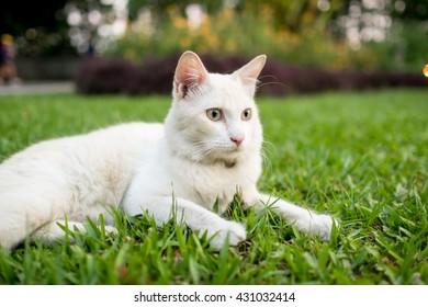Goatlings Cat Ears