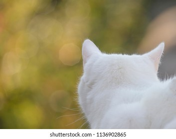 a white cat sits on a fence post and looks into sparkling patches of sunlight