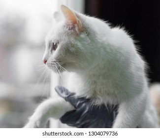 white cat sits on a hands in an animal shelter