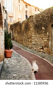 White cat sitting in an alleyway in the quaint little French hilltop village of Saint-Paul de Vence, Southern France,  Alpes Maritimes, next to the Mediterranean sea - A Heritage Site