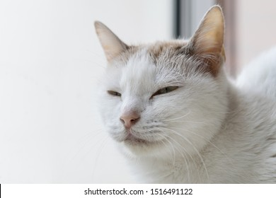 A white cat sitting by the window.