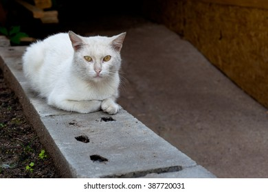 A white cat sitting on grey block