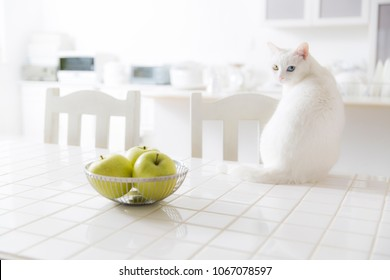 White cat sitting on the kitchen table