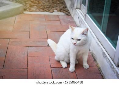 white cat sitting on old brick terrace