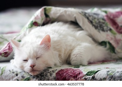 White cat sleeping in the bed.