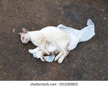 White cat sleeping on a plastic bag on a sidewalk. Manaus - Amazon, Brazil