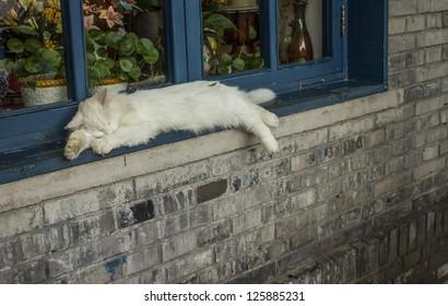 White cat sleeping on a windowsill in Beijing China