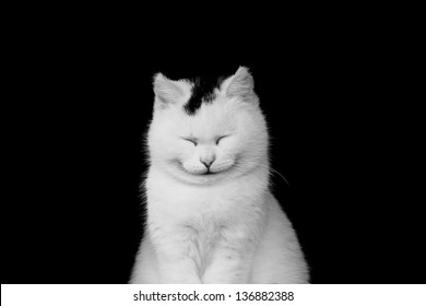 White cat smiling