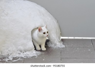 White cat in snow igloo