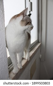 A white cat with spots standing on a window sill.