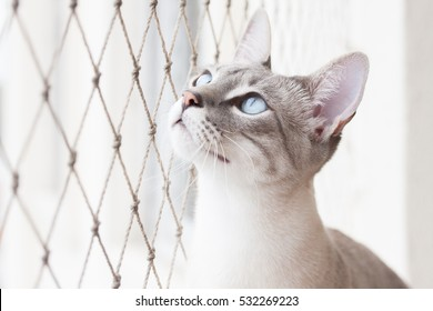 White cat stretches to look outside safety net
