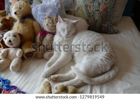 White Cat Teddy Bear Stock Photo Edit Now 1279819549 Shutterstock