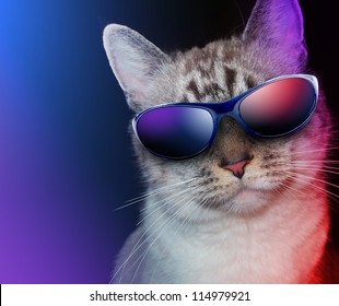 A white cat is wearing sunglasses on a black background with party lights around the feline.