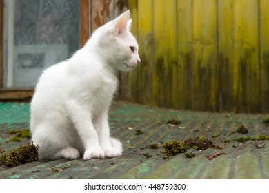 white cat in the yard