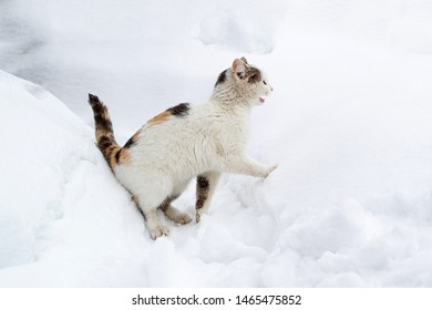 white cat yelling in the snow, homeless animal in the cold winter on the street