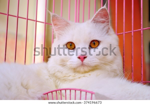 White Cat with yellow eye on cage
