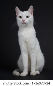 White cat with yellow eyes on a black background